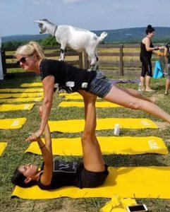 L'attribut alt de cette image est vide, son nom de fichier est Yoga-avec-chèvres2-241x300-1.jpg.