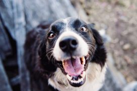 animal-blur-canine-551628-1080x721